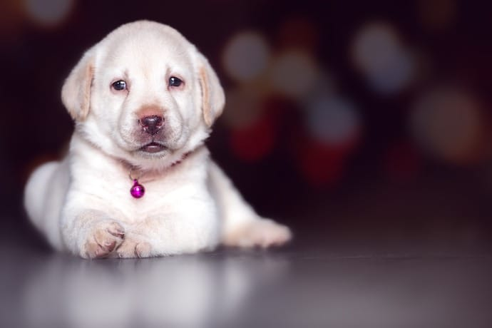 Puppy-proofing your house