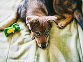 dog separation anxiety article