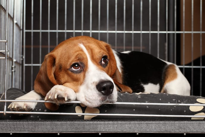 Sad Dog in a crate