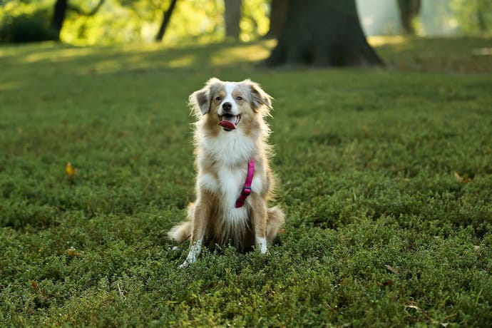 how to maintain your dog's healthy weight