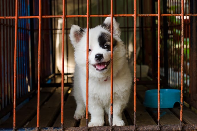 Cute Puppy in a Crate