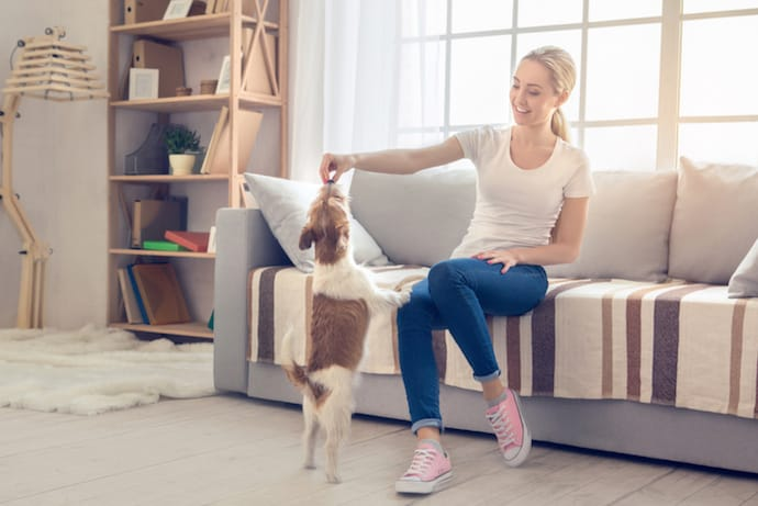 Woman Playing With A Dog Indoors