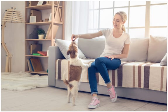 22 Indoor Activities for Dogs: Games and Exercises to Entertain Your Dog at Home