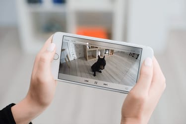 How to Use Cloud Video for Virtual Pet Care