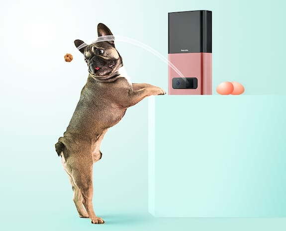 Petcube Hunt For Cuteness: Join The Ultimate Scavenger Hunt
