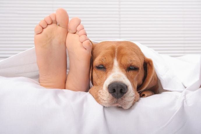 Dog on a bed with human legs