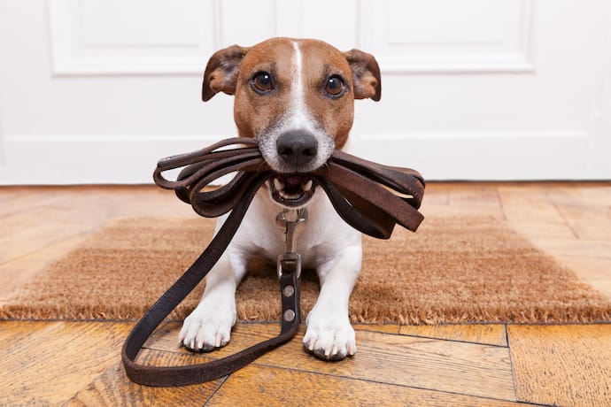 dog with a leash home alone