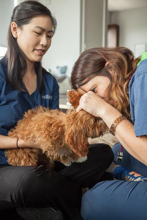 Pet Care Vetted