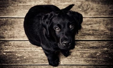 How to Adopt a Dog: Everything from A to Z