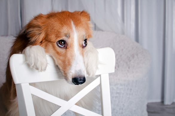 Why Do Dogs Whine and How To Stop It