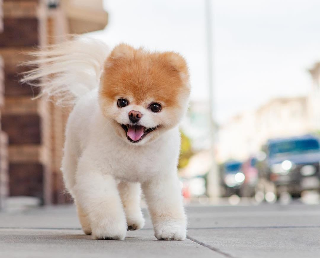 8 Cutest And Most Hilarious Dog Haircuts For Your Inspiration