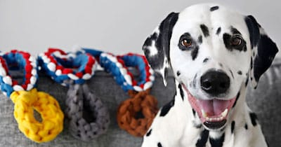 12 Olympic Pets Who Bagged the Gold