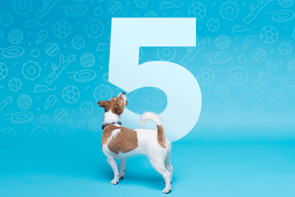 5 Dog Training Tips from a 5-star Rover Sitter