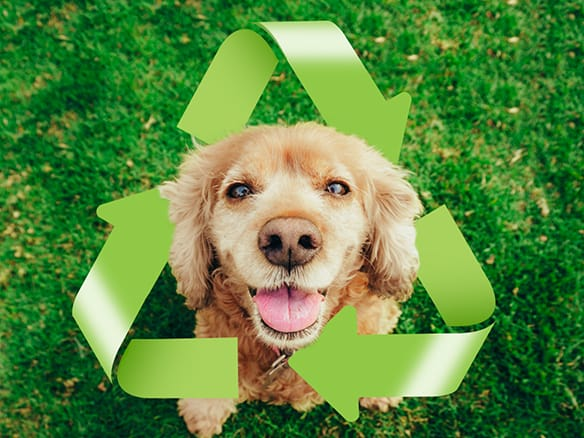 Earth Day: 10 Tips to Reduce Your Carbon Pawprint