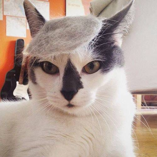 cat with Trump hair 2