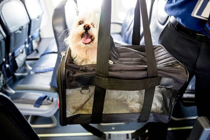 Caring a dog on a plane in a bag