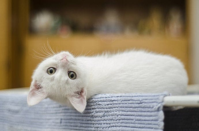 cute cat laying home alone