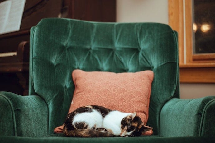 Depressed cat is sleeping on the couch