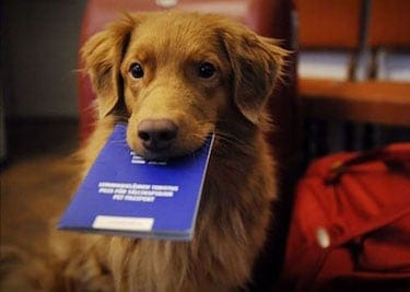 The Ins and Outs of Pet Passports