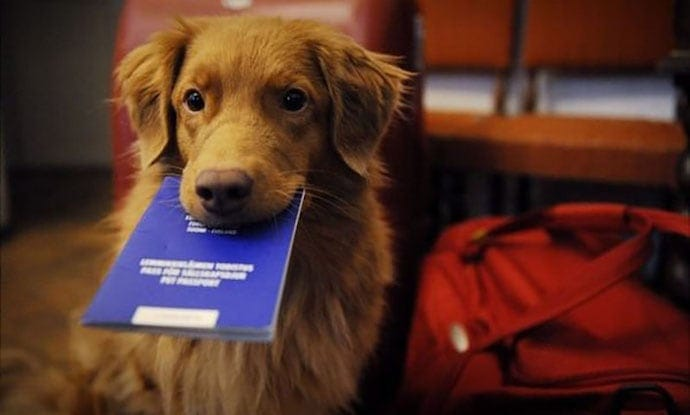 A dog with a passport