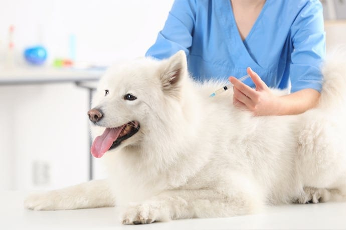 Why Your Dog Can Get Vaccinated Against >> Pet Vaccinations How Often And What Vaccinations Cats Dogs Need