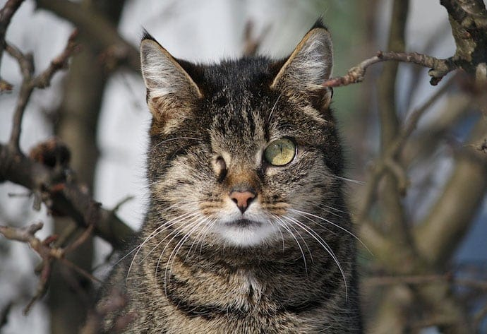 Wild one-eyed cat in the woods