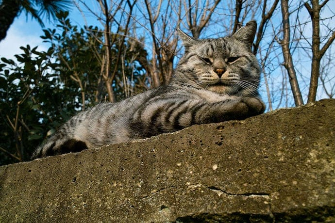 how to adopt feral cats like this feline sitting on the wall