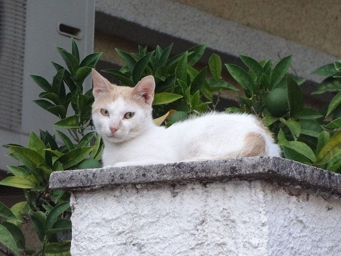 pet cameras for feral kitten like this white cat