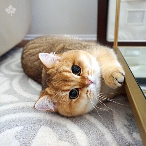 Cute cat laying on the floor