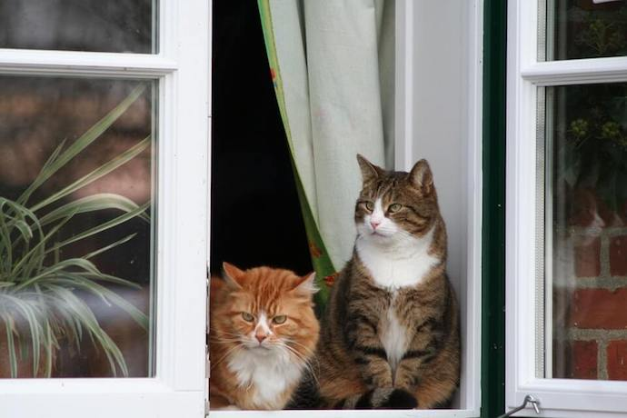 two cats home alone sitting on the window