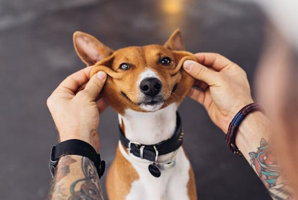 A Full List Of Dog Breeds That Bark The Most And Don T