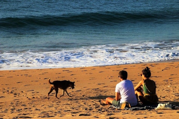 dog with parents on the beach