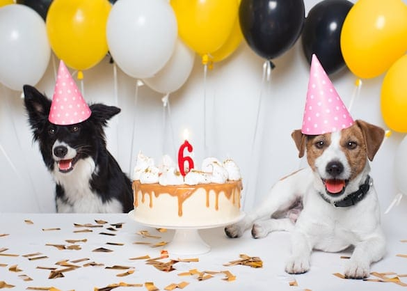Dog Birthday Party Guide: Throwing the Best Dog Party Ever