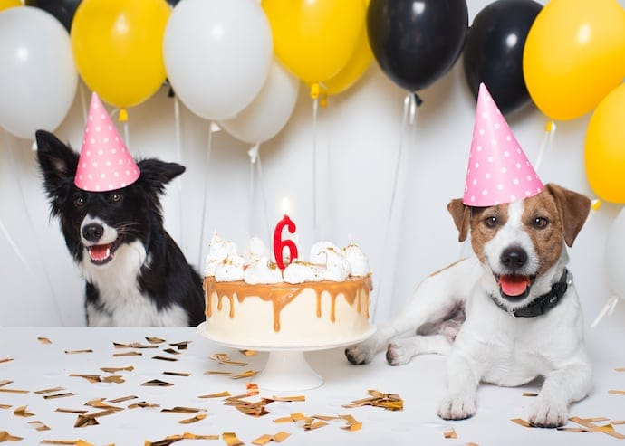 Two Dogs Happy Birthday Party with a cake