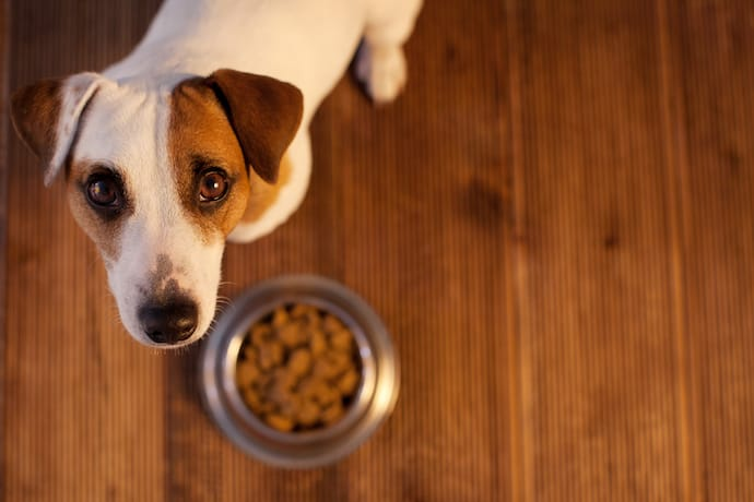 Dog with a bowl staring at you