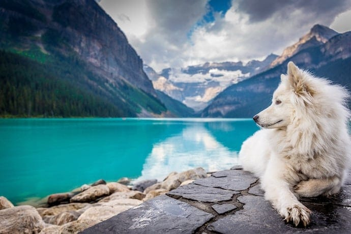 dog on vacation is laying near the lake