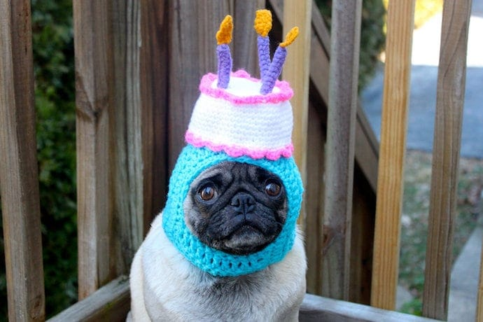 a dog in a birthday party costume