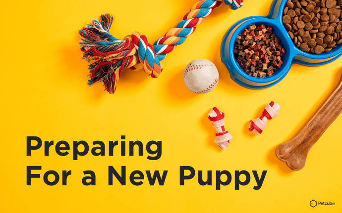 Preparing for a new puppy supplies