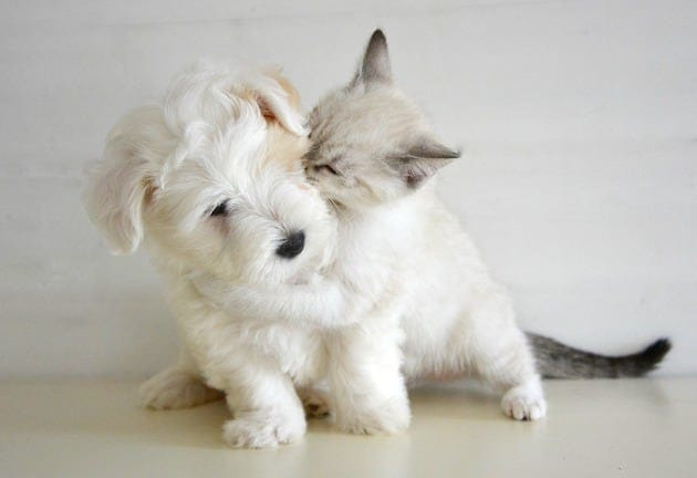 Puppy with a kitten are friends