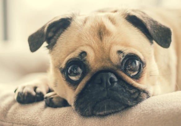 7 Critical Signs Your Pet Needs Immediate Veterinary Attention