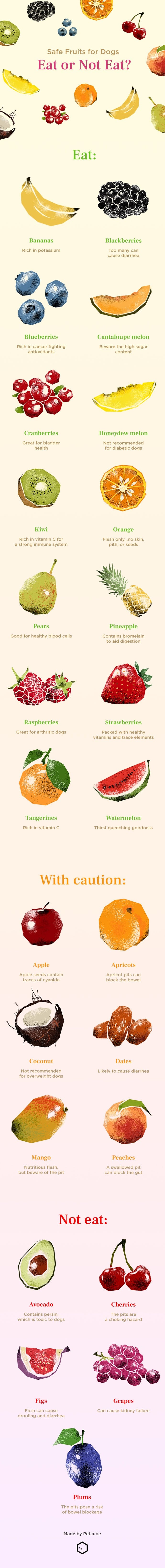 fruits for dogs infographic