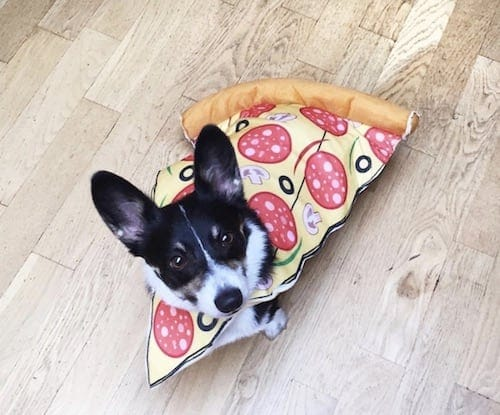 Dog weared in pizza costume