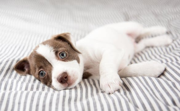 Guide to Raising a Puppy When You Work Full Time