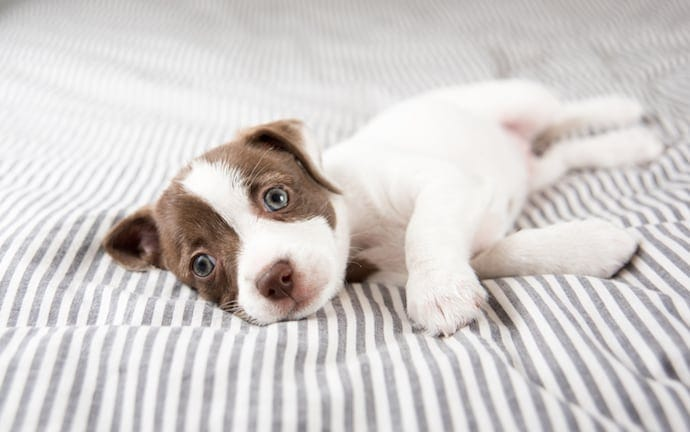 An Eye-Opening Insight into 'How Much Sleep Do Dogs Need?' and Why