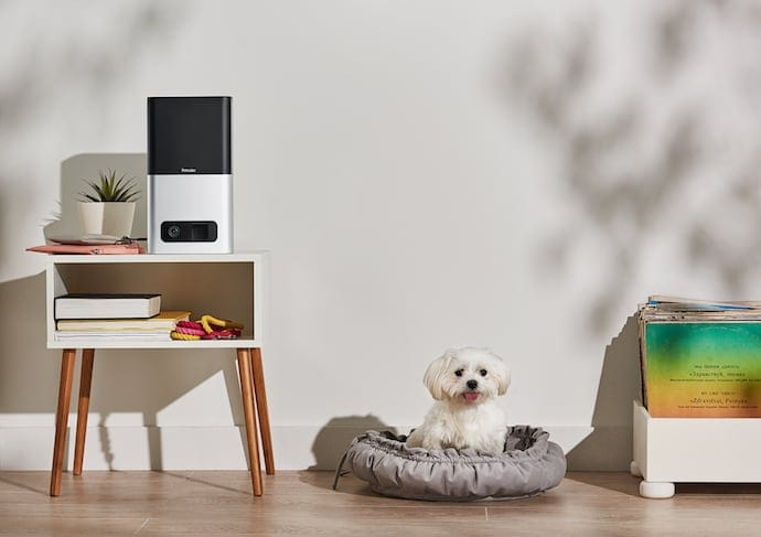Petcube pet camera to monitor puppy home alone
