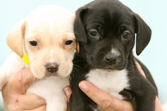 two puppies holding in human hand
