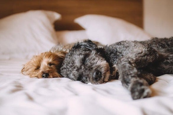 The Adorable Truth Behind Why Dogs Sleep all Day