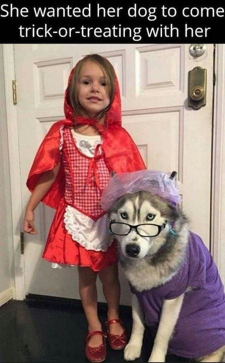 Little-Red-Riding-Hood-dog-halloween-costume