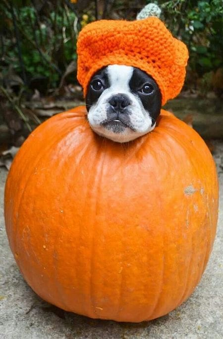 15 Spooktacular Dog Halloween Costumes From Super Cute To