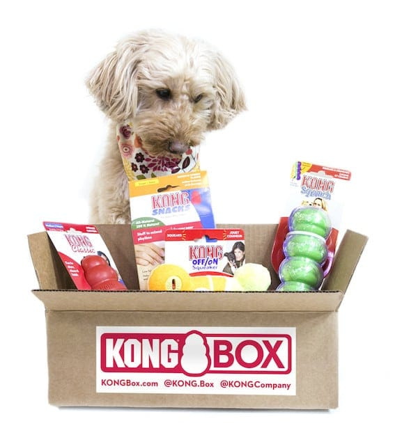 KONG box with a dog